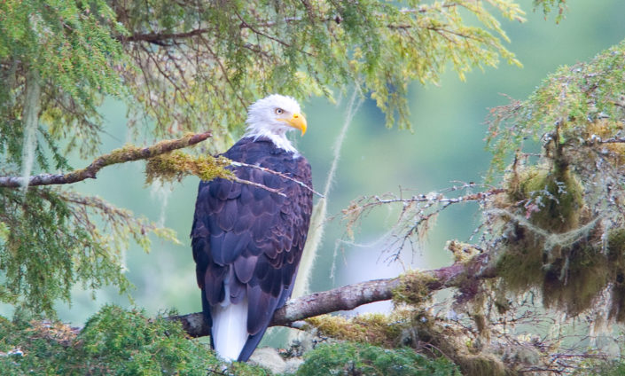 Eagle sightings on our Wildlife Cruise